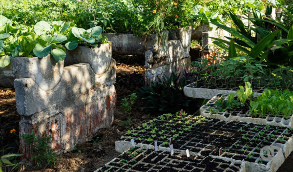Planting on Havana´s Rooftops and in Backyards