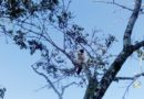 Cat Bird, Cuba – Photo of the Day
